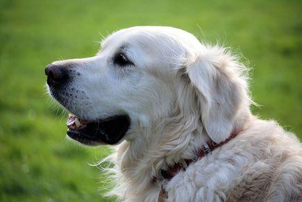 Karma mokra w żywieniu psa