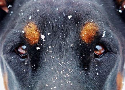 Wy(po)rzucenie psa jest PRZESTĘPSTWEM.