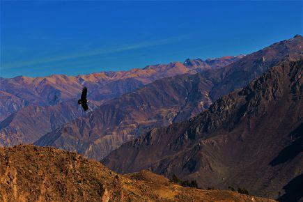 Colca – najgłębszy kanion na świecie