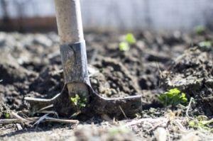 Przygotuj swój ogród do wiosny