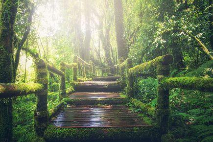 Dlaczego nie możemy żyć bez przyrody?