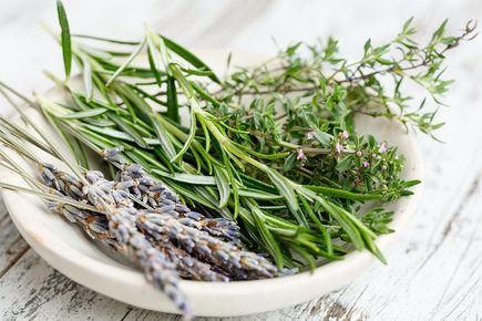 Jak stosować zioła na dolegliwości żołądkowe?