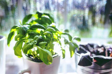 Jak stworzyć własny ogródek ziołowy