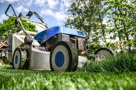 Trawnik - zakładanie i pielęgnacja