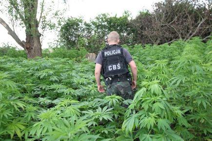 Marihuana jakiej nie znaliście czyli coś o ziołach