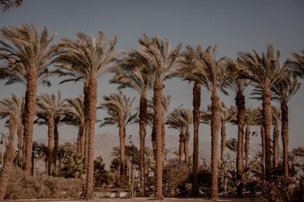 Ejlat - południowy Izrael w pigułce