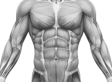 Powięź mięśniowa