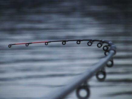 Technika łowienia drapieżników z opadu