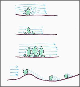 Wpływ zadrzewień na kierunek i prędkość wiatru