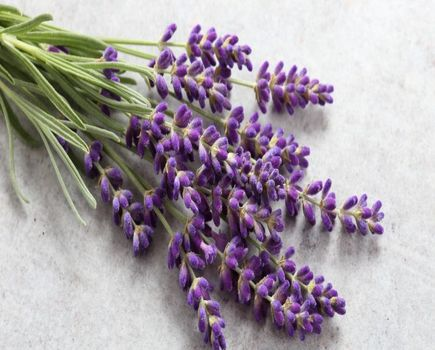 Lavendowe love