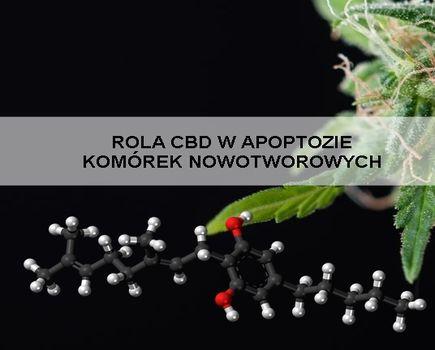Jak pokonać raka ? Medyczna Marijuana