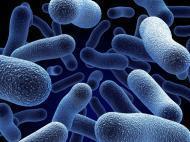 5901_bakterieecoliwczeskiejwodziemineralnej_0_1