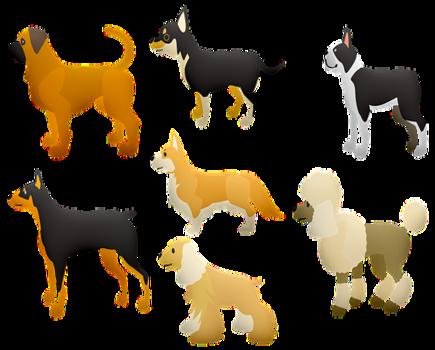 Najpopularniejsze rasy psów