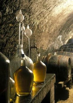 Produkcja win białych