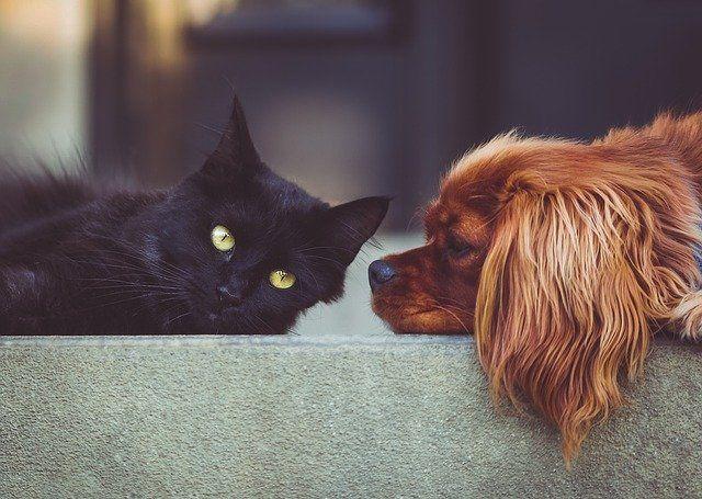 Wszystko o sterylizacji i kastracji psów i kotów