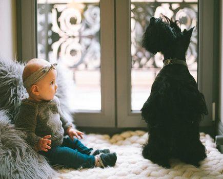 Pies i nowy członek rodziny pod jednych dachem – jak się do tego przygotować?