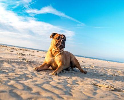 Urlop z psem – czy to dobry pomysł?