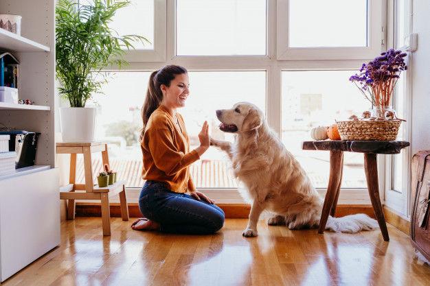 Kilka słów o wychowaniu psa w domu
