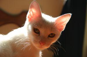 Szczęśliwy kot, to wierny towarzysz