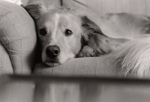 Szczęśliwy pies grzecznie czeka na swojego Pana
