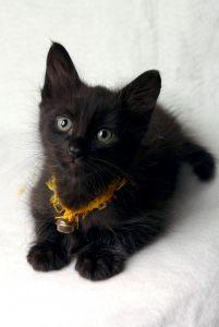 Mały, czarny kociak