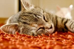 Zdrowy, szczęśliwy kot
