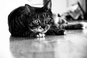 Dbaj o swojego kota, by długo cieszył się życiem