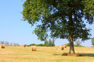 Wybierz piękne miejsce na piknik