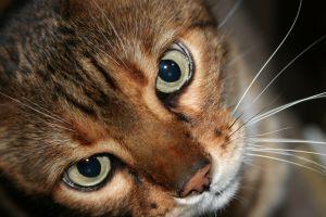 Kot przed wizytą u weterynarza