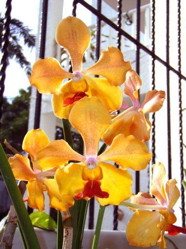 kwiaty zdjęcia storczyki, kwiaty doniczkowe
