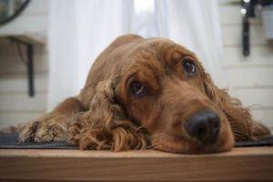 Karma dla psa z problemami - czy odpowiednia karma wystarczy?