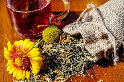 Czystek – magiczne zioło na wszystko? Właściwości i zastosowanie