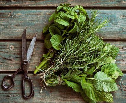 Holy Basil-święta roślina z Indii. Czyli jak się uchronić od przeziębienia i grypy.