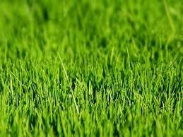 Trawnik w czasie upalnego lata
