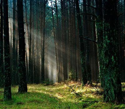 Drzewa komunikują się ze sobą i przekazują sobie sygnały- Peter Wohlleben
