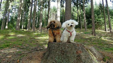 Jak zadbać w lesie o psiego pupila bez mandatu?