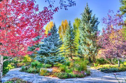 Jak nie dać się depresji wykorzystując drzewa?