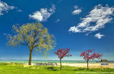 Jak Papier z kamienia może ochronić drzewa i oszczędzić wodę?
