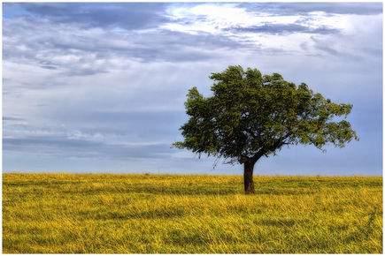 Drzewo jako symbol przyjaźni, trwałego związku oraz cenny surowiec