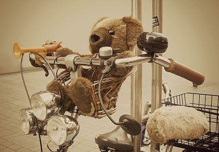 Jak wybrać fotelik rowerowy