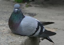 Sposoby na odstraszenie ptaków