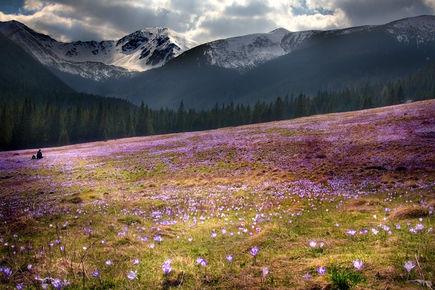 Dolina Chochołowska - piękna i największa