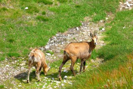 Ochrona flory i fauny w Tatrach