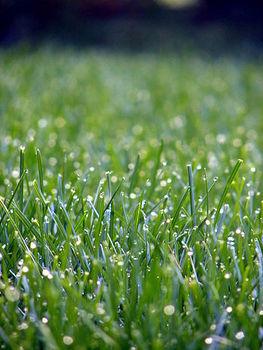 Utrzymanie pięknego trawnika jest proste!
