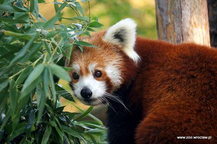 Firefox pod ochroną