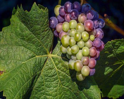 Wino ekologiczne – kolejny chwyt marketingowy?
