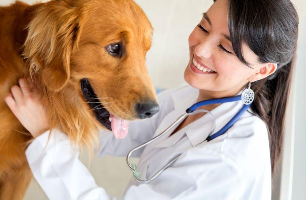 Strzyżenie psów – dlaczego lepiej z...