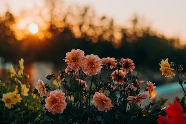 Jakie polne kwiaty nadają się do uprawy w ogrodzie?