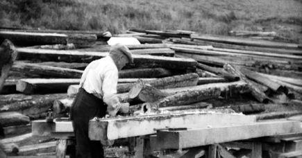 Jak powstają meble - od drzewa do mebla