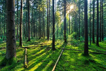 Postaw na ekologię wybierając meble drewniane!